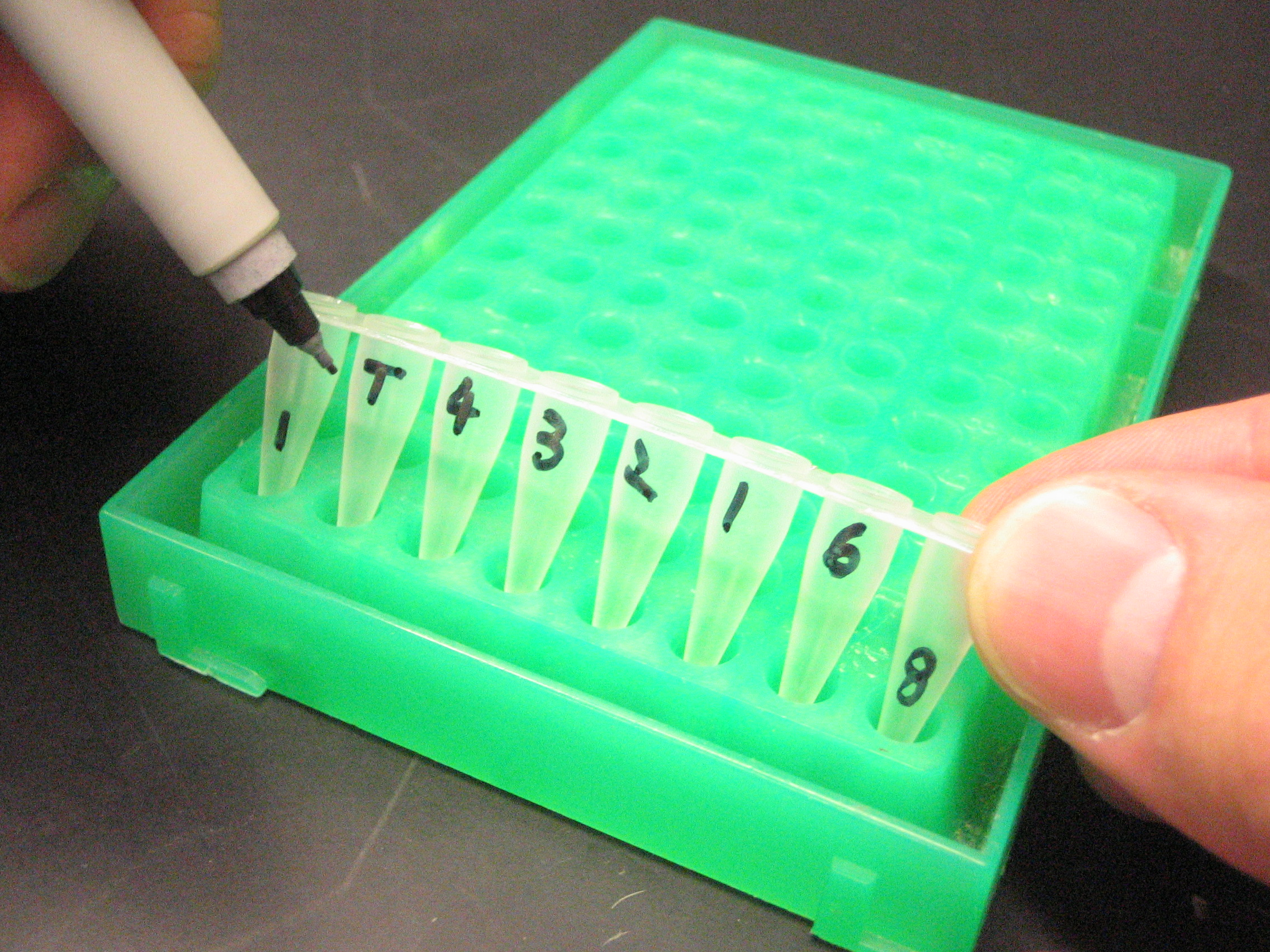 labelling samples with order number and marking which the first sample is